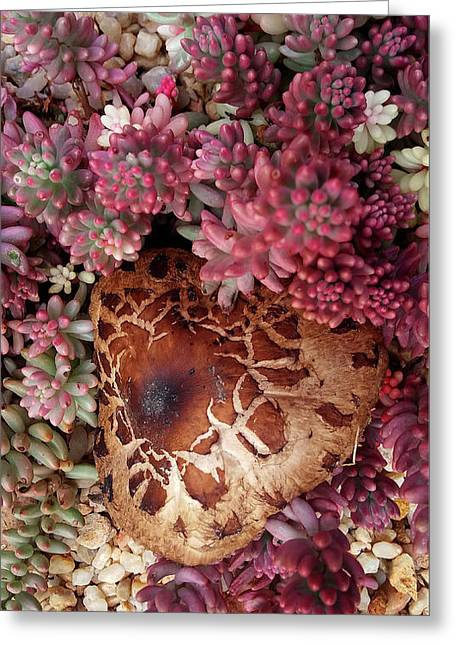 Fungus And Succulents Greeting Card