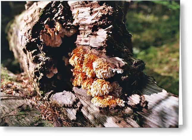 Fungus Is Beautiful Greeting Card