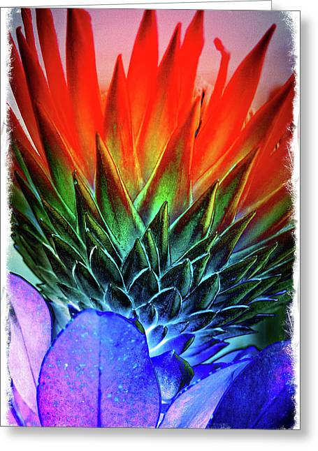 Funky Protea Greeting Card