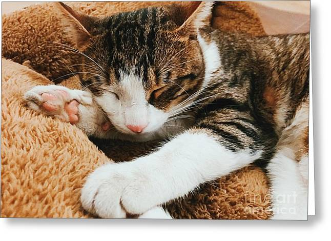 Funny Cute Cat Portrait Sleeping Greeting Card