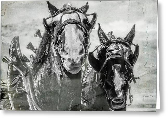 Greeting Card featuring the photograph Funny Draft Horses by Mary Hone