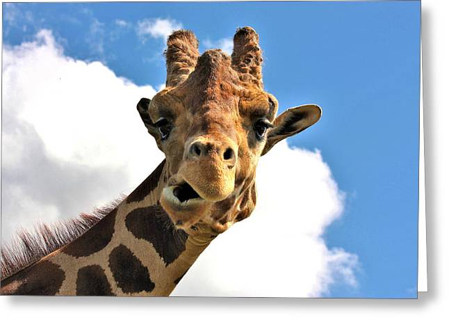 Funny Face Giraffe Greeting Card