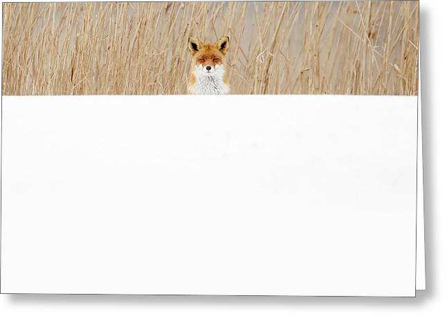 Funny Fox In The Snow Greeting Card by Roeselien Raimond