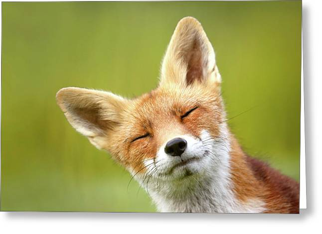 Funny Fox Photo Bombing My Photo Greeting Card
