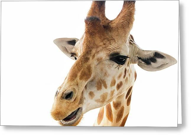 Funny Giraffe Greeting Card