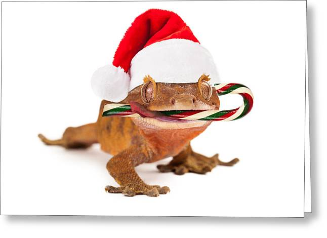 Funny Lizard Eating Christmas Candy Cane Greeting Card by Susan Schmitz