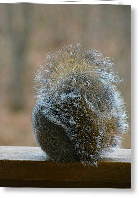 Greeting Card featuring the photograph Fur Ball by SimplyCMB