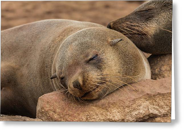 Fur Seal Basking At Cape Cross Greeting Card by Colin Chalkley
