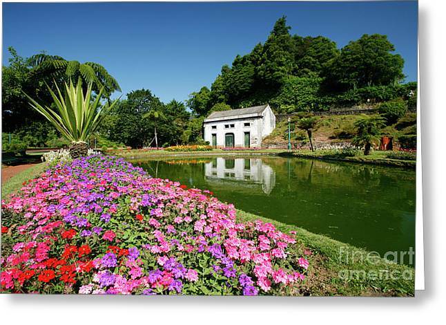 Furnas Valley, Azores Islands Greeting Card by Gaspar Avila