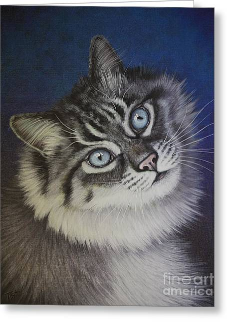 Furry Tabby Cat Greeting Card
