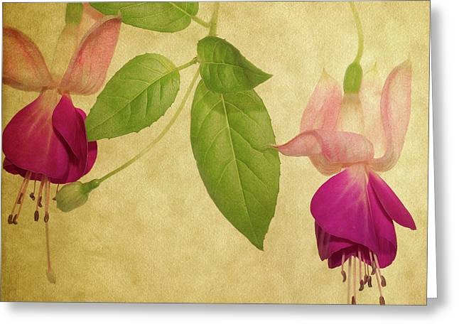 Fuschia #5 Greeting Card by Rebecca Cozart