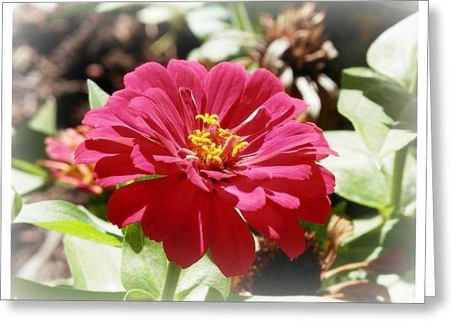 Fuschia Glory Greeting Card