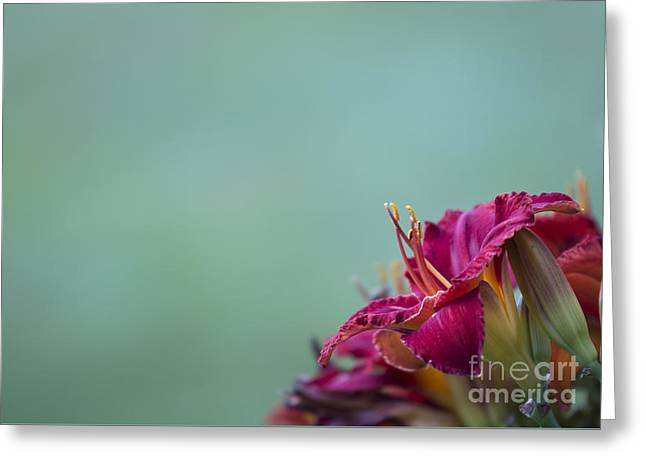Greeting Card featuring the photograph Fuchsia In Bloom by Andrea Silies