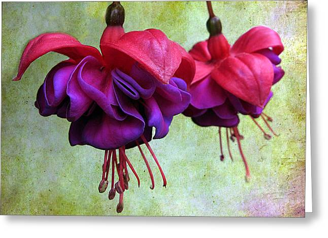 Fuschia Greeting Card by Jessica Jenney