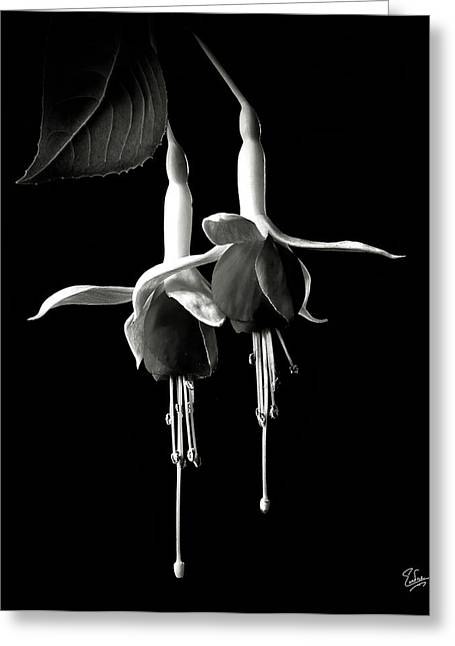 Fuschias In Black And White Greeting Card by Endre Balogh