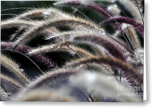 Fuzzy Greeting Card by Clayton Bruster