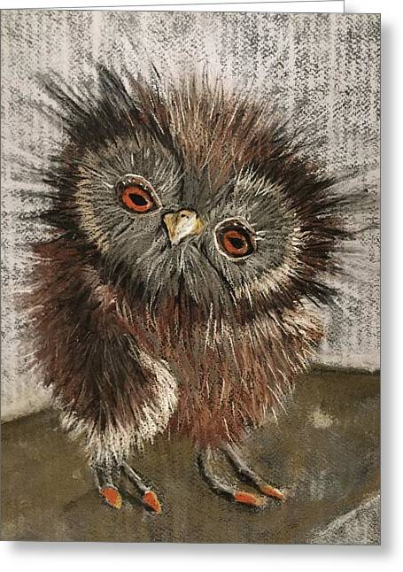 Fuzzy Owl Greeting Card