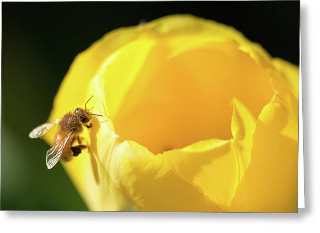 Greeting Card featuring the photograph Fuzzy Pollen by Brian Hale