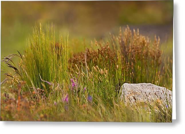 Fynbos Reeds Greeting Card by Basie Van Zyl