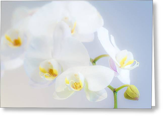 Gail's Orchids Greeting Card