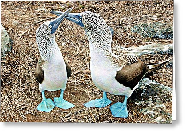 Galapagos Blue-footed Boobies Dance Greeting Card