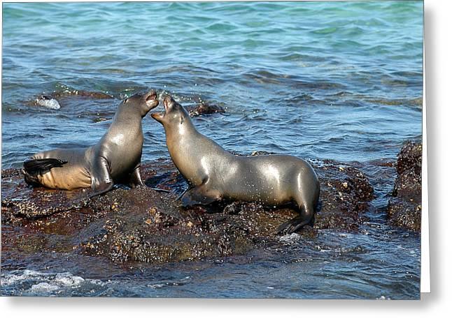 Galapagos Sea Lion Greeting Card by Alan Lenk