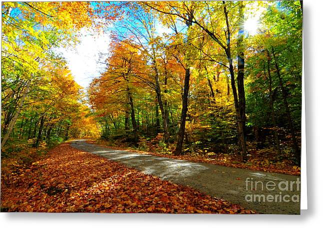 Gale River Road  Greeting Card