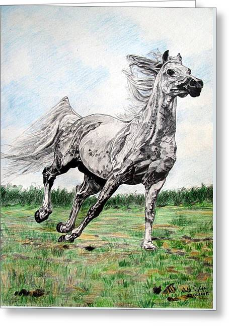 Galloping Arab Horse Greeting Card by Melita Safran