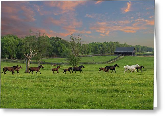 Galloping In The Kentucky Bluegrass Greeting Card