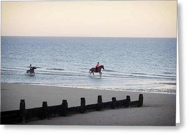 Galloping On The Beach  Greeting Card by Martin Newman