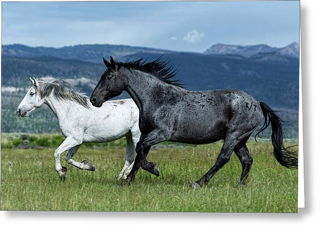 Galloping Through The Scenery Greeting Card