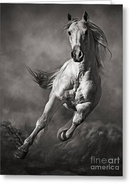Galloping White Horse In Dust Greeting Card