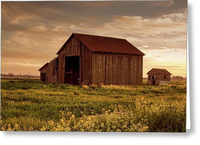 Galt Barn At Sunset Greeting Card