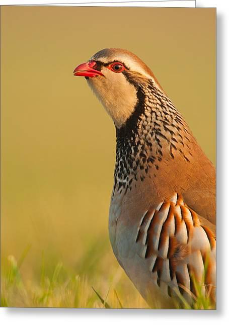 Game Bird Greeting Card