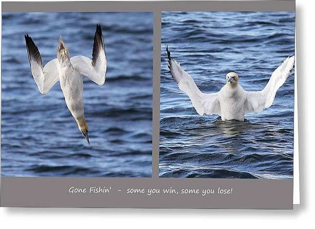 Gannet - Bad Day At The Office. Greeting Card