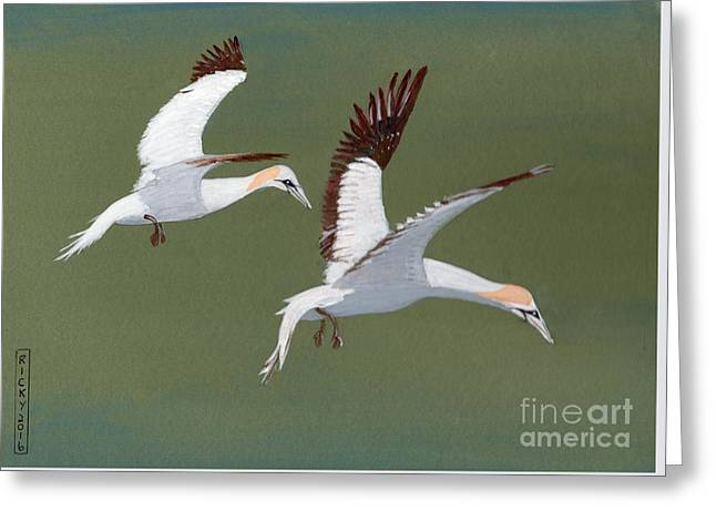 Gannets - Painting Greeting Card