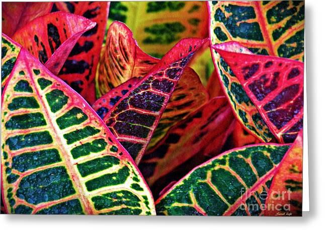 Garden Croton 3 Greeting Card by Sarah Loft