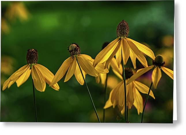 Garden Dancers Greeting Card by Don Spenner
