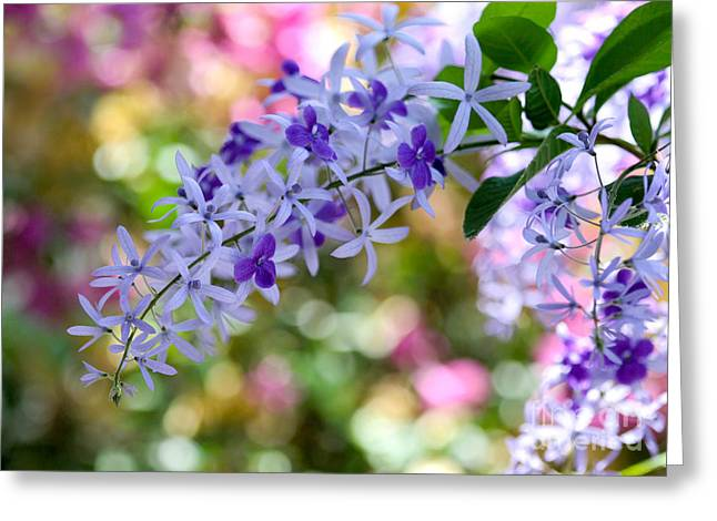 Garden Full Of Colors Greeting Card by Sabrina L Ryan