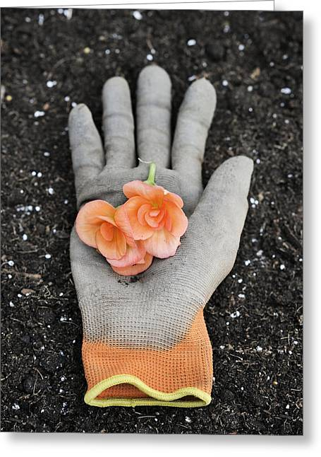 Garden Glove And Flower Blossoms4 Greeting Card