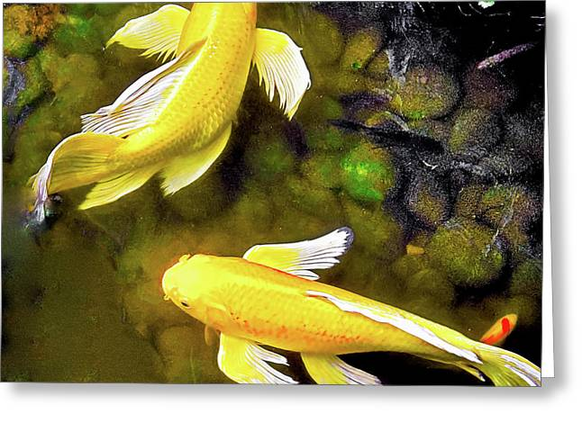 Greeting Card featuring the photograph Garden Goldenfish by James Fannin