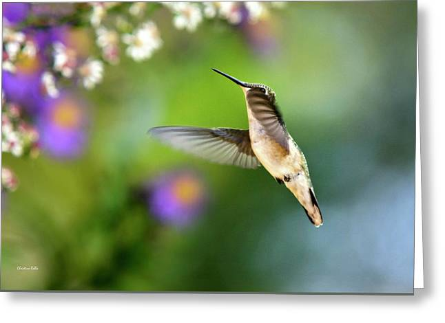 Garden Hummingbird Greeting Card by Christina Rollo