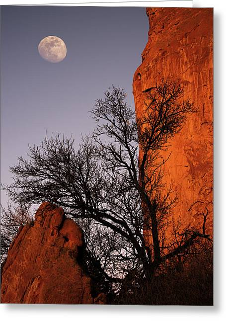 Garden Moon Greeting Card by Darren White
