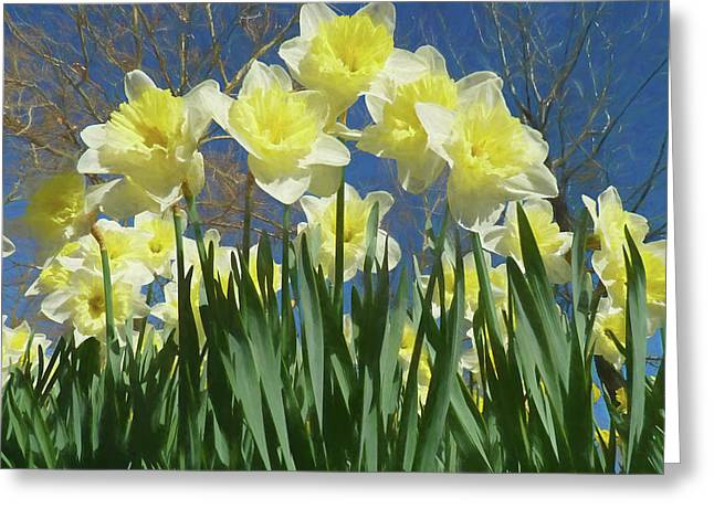 Greeting Card featuring the photograph Garden Of Daffodils by Donna Kennedy