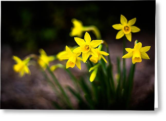 Garden Of Daffodils Greeting Card by Shelby Young