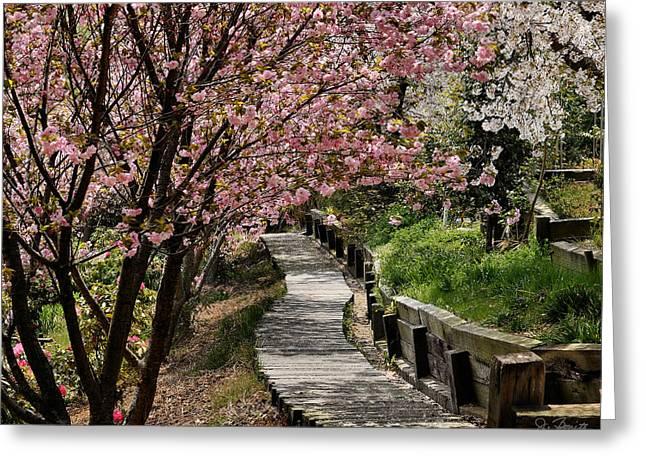 Garden Path No. 2 Greeting Card by Joe Bonita