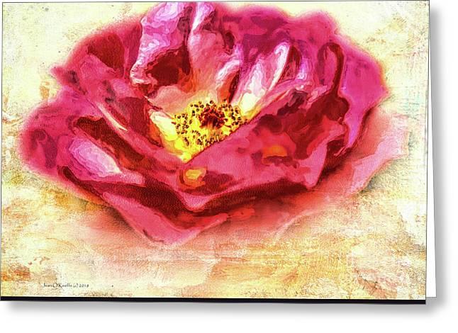 Garden Rose Greeting Card by Jean OKeeffe Macro Abundance Art