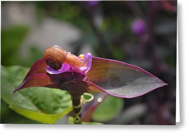 Garden Snails Wandering Greeting Card