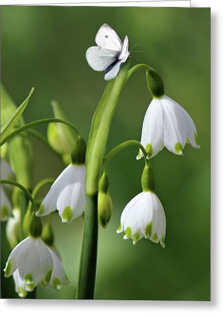 Garden Snowdrops Greeting Card