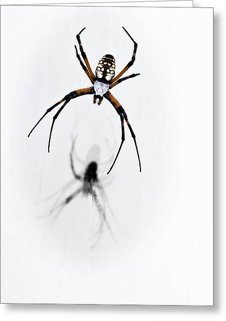 Tamyra Ayles Greeting Cards - Garden Spider with shadow Greeting Card by Tamyra Ayles